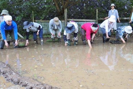 泥まみれの田植え