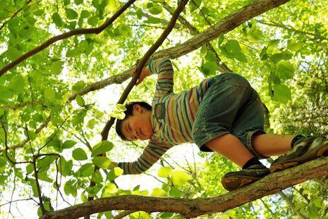 木登りヒカル