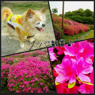 PhotoGrid_1461890747222.jpg