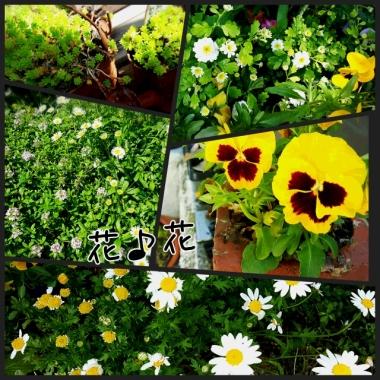 PhotoGrid_1462321927065.jpg