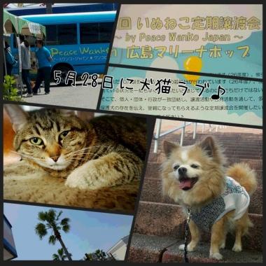 PhotoGrid_1463365781128.jpg