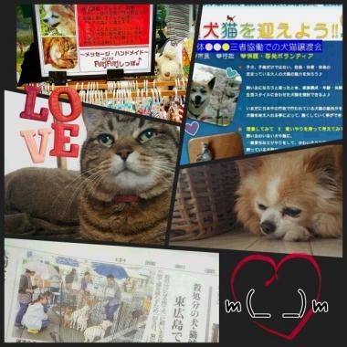 PhotoGrid_1465178694591.jpg