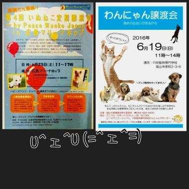 PhotoGrid_1466398027924.jpg