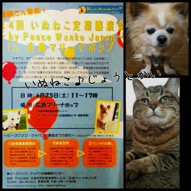 PhotoGrid_1466740955741.jpg