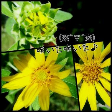PhotoGrid_1470786597129.jpg