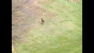 新千歳12番鹿