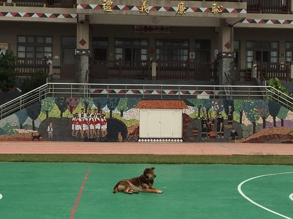 gga11a3日目校庭に犬