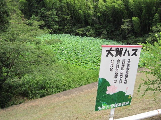 taigahasu01