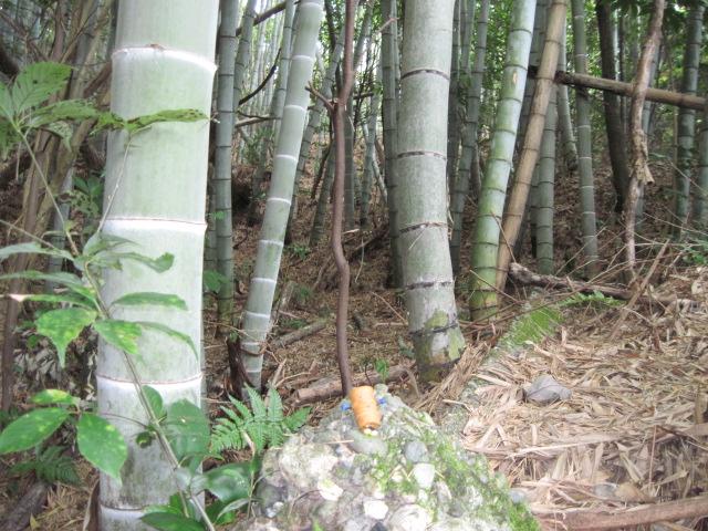 takeyabu01