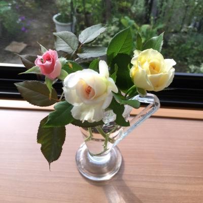 朝採り薔薇ちゃん