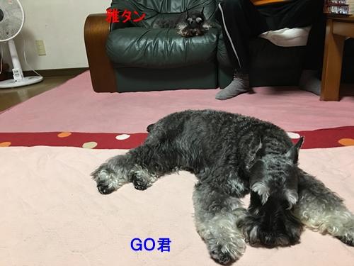 GO2016年9月24日1
