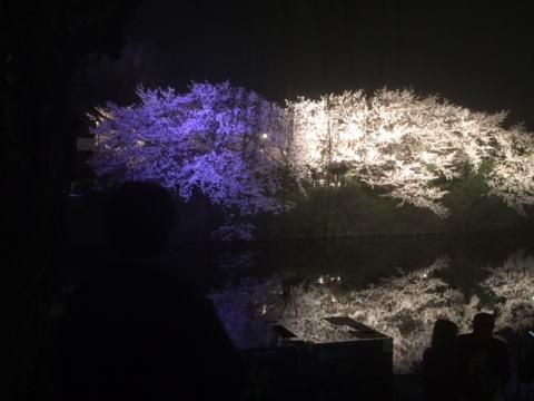 大濠公園桜33
