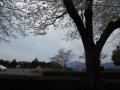 豊後荘の花見 (2)