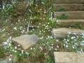 庭花 (2)