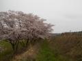 桜樹下から館 (1)