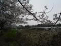桜樹下から館 (3)