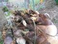 筍 (1)