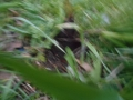筍 (4)