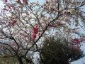樹花0419-1