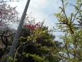 樹花0419-2
