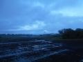 雨上がり0422 (3)