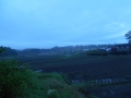 雨上がり0422 (2)