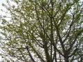 芽吹き0424 (2)