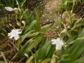 花々0425 (1)