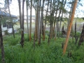 0430竹林