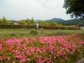 草刈0602 (1)
