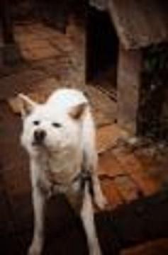 老犬ハナです。16才。