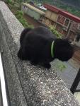 ホウトンの猫4