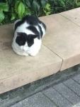 ホウトンの猫5