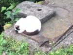 ホウトンの猫2