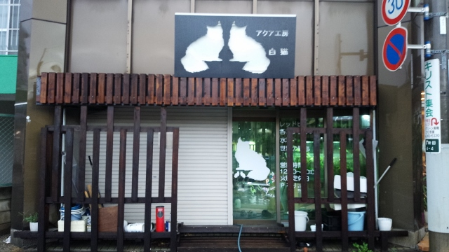 しろねこ (640x360)