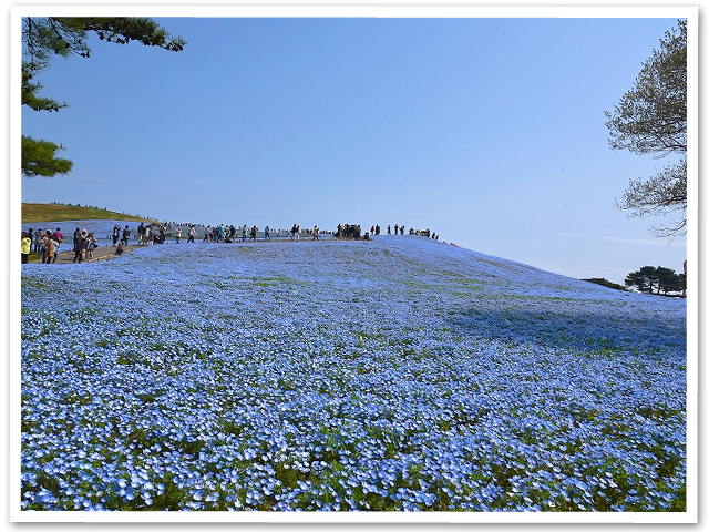 ひたち海浜公園①