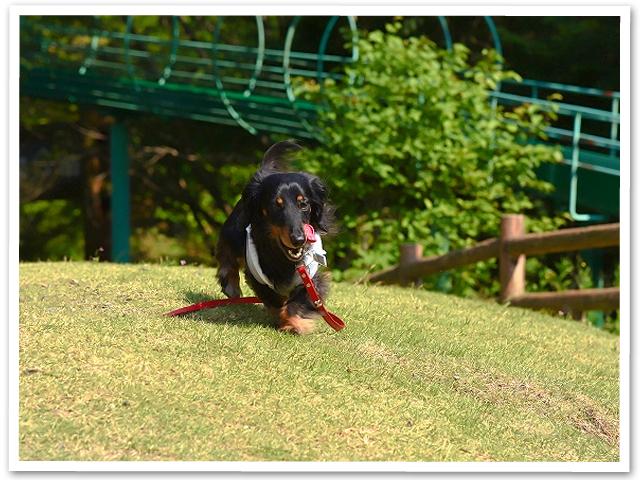 散歩☆見晴らしの丘公園