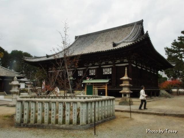 鶴林寺のナツツバキ