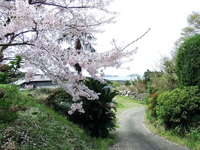 桜(染井吉野)(120478 byte)