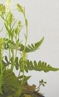 緑花H28年4月B