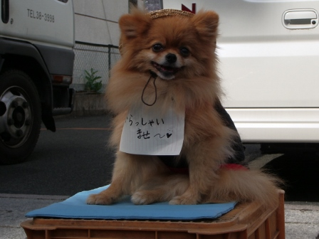 よいちの看板犬