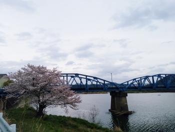 20160403桜