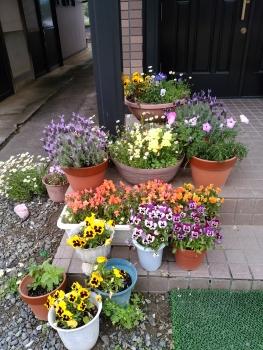 20160510玄関の花~♪