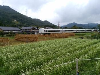 20160914そばの花 稲木 そして電車~~(*^^)v