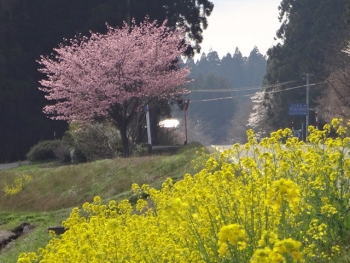 KAKUNODATE2016042215.jpg
