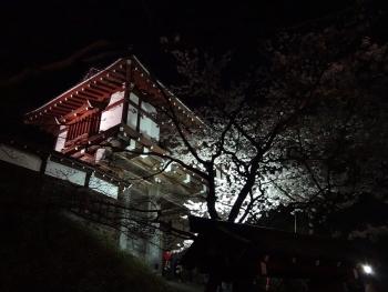 SENSYUU20160422sakura02.jpg