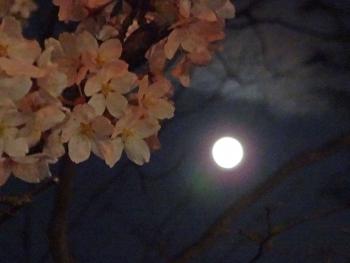 moon20160422sakura01.jpg