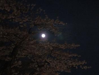 moon20160422sakura03.jpg