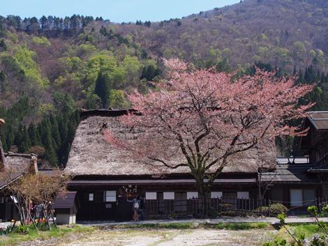 桜のある風景♪