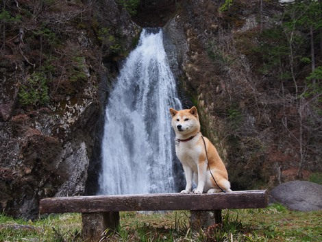 銚子の滝とさくら